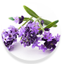 WOW Skin Science Citronella Essential Oil Helps remove toxins