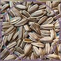 Melon Seed Oil