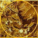 Gold Montmorillonite