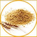 Cocodimonium Hydroxypropyl Hydrolyzed Wheat Protein (gluten-free)