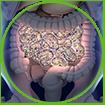 WOW Life Science Probiotic Helps Healthier Gut Flora