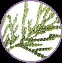 Alteromonas Ferment Extract